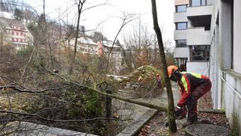 Die Bäume werden gefällt und per Kran abtransportiert. Für die Arbeiten zeichnen die Männer des Forstbetriebs Brugg verantwortlich.