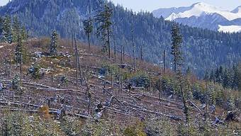 Lothar mähte vor 10 Jahren riesige Waldflächen um (Archiv)