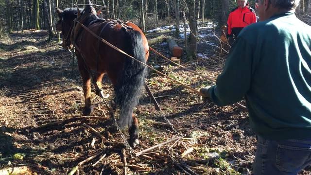 Holzen mit Pferdestärke: So gehts.