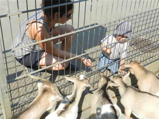 Das wird sich wohl nie ändern: Kleine Kinder lieben Ziegenfüttern.