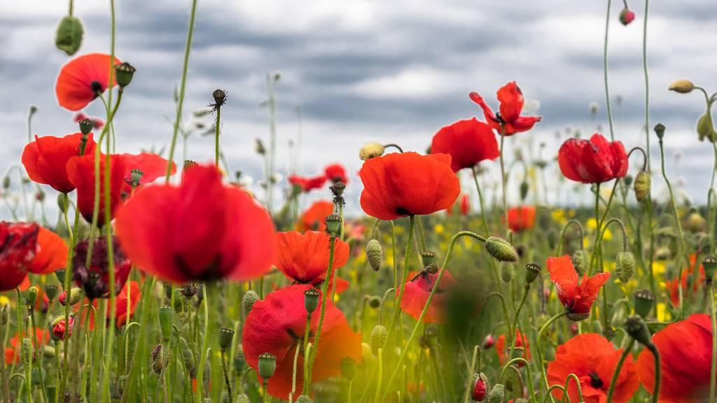 Das sind die Top 10 Frühlingsblumen