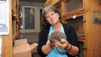 Margrit Kobel aus Meisterschwanden betreibt in ihrem Keller eine Igelstation.