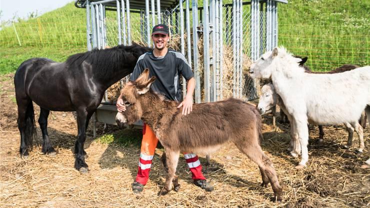 Der Wirbelwind Elvis von der Freizeitanlage Chrüzacher kam in eine Benimmschule – auf eine Fohlenweide im Aargau.