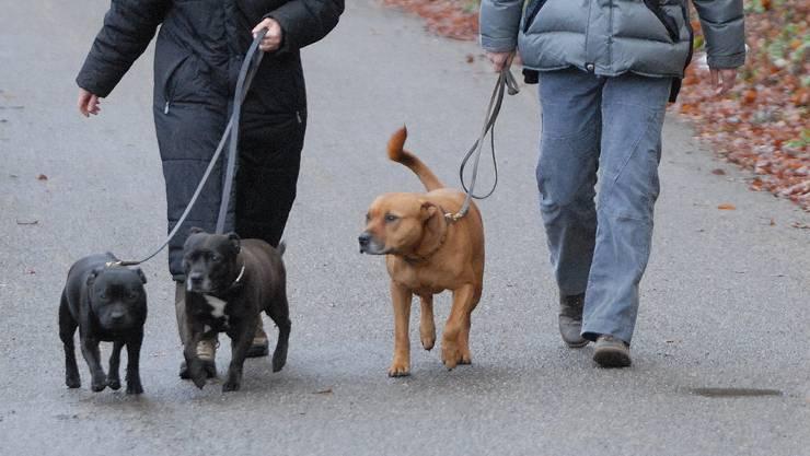 In den beiden Basel sind potenziell gefährliche Hunde wie die beiden Staffordshire Bullterrier (links) oder der Rottweiler-Pitbull-Mischling (rechts) bewilligungspflichtig. (Walter Schwager)