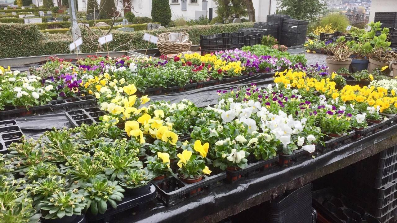 Schnittblumen kauft die Gärtnerei Petermann momentan nur auf Bestellung ein. Der sonstige Betrieb läuft – über den Lieferservice – normal ab.