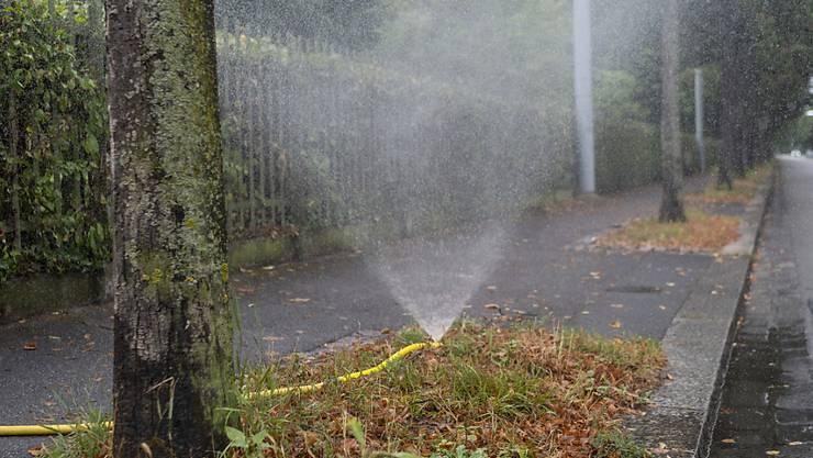 Ohne Bewässerung können die Basler Stadtbäume die anhaltenden Hitze- und Trockenperioden nicht überstehen.