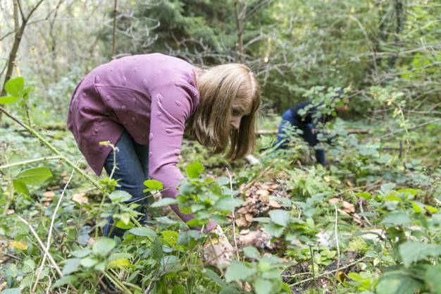 Andrea Sommerhalder versucht im Dickicht des Gubrist-Walds den Höhleneingang zu finden.