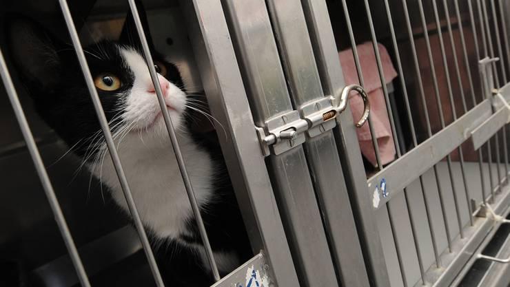 Auch diese Katze hat im Tierheim auf dem Walzwerk-Areal ein freies Plätzchen gefunden. Juri Junkov