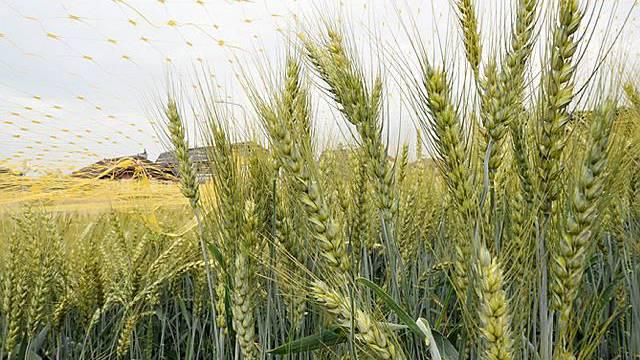 Schweiz besteht aus 54 Agrarlandschaften
