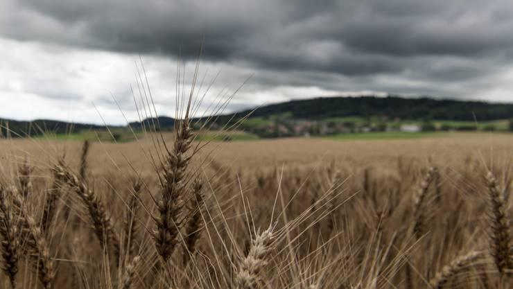 """Die Landwirtschaft betrifft uns alle - darin sind sich Bauern und Politiker einig. Die Initiative """"für Ernährungssouveränität"""" ist dem Nationalrat aber zu rückwärtsgewandt und zu protektionistisch. (Symbolbild)"""