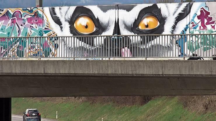 Der Lemur bei der Eisenbahnbrücke in Aarau Telli.