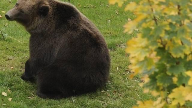 Der Bär hat das Bündnerland wieder verlassen