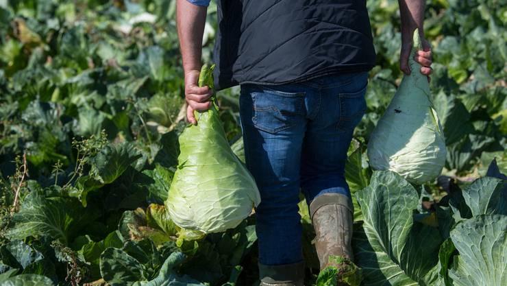 Europäische Landwirte freuen sich: Sie können ihre Produkte bald fast zollfrei nach Japan liefern.