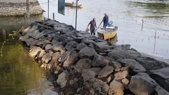 Diessenhofer Fischer fischen die Rückzugsgebiete am Rheinufer ab und setzen die Fische im Geisslibach wieder aus. Die dortigen Wassertemperaturen ermöglichen den Fischen das Überleben.