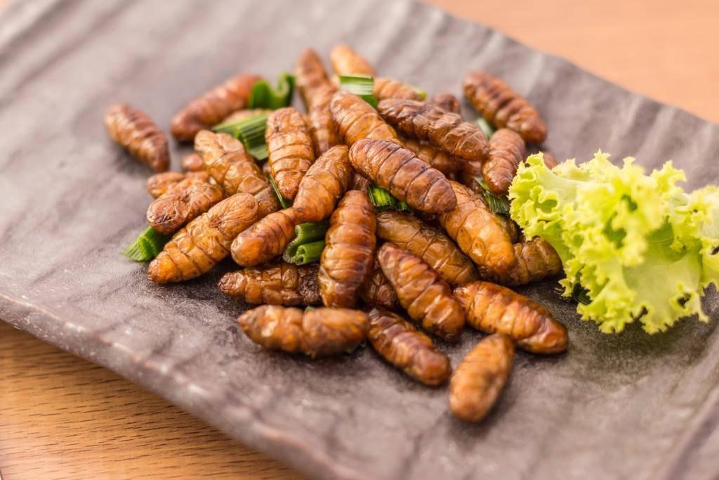 Date beim Insekten-Dinner? Kannst du haben - am 3. August in Gossau
