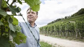 Skeptischer Blick in die Reben Viele Winzer haben wie Andreas Meier in Würenlingen AG mit Schäden zu kämpfen, die von einem Bayer-Produkt verursacht wurden. Tanja Demarmels.jpg