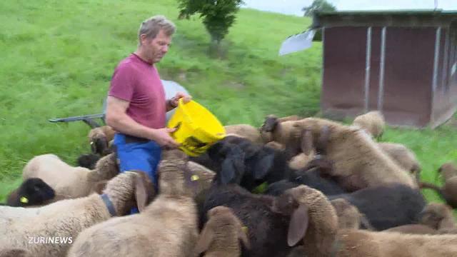 Wie lockte Urs Kägi seine Schafe vom Gleis weg?