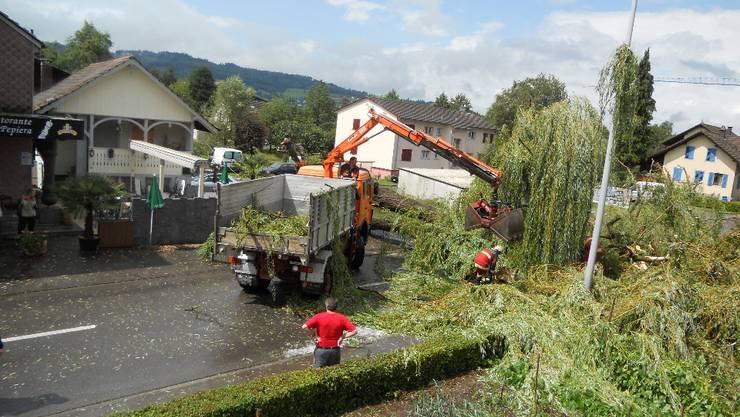 Besitzer haften, wenn der Baum fällt