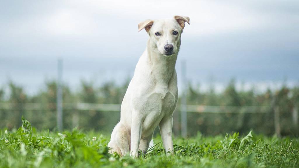 Patenhund Aric