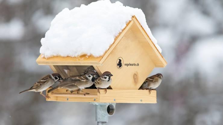 Hygiene ist beim Füttern zentral: An Futterhäuschen treffen sich viele Vögel, so dass sie sich leicht gegenseitig mit Krankheitserregern anstecken können.