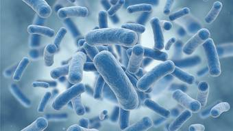 Die Krankheit äussert sich vor allem als Lungenentzündung und kann in 5 bis 15 Prozent trotz Antibiotikabehandlung zum Tod führen. (Symbolbild)