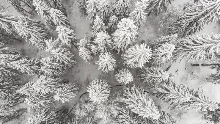 Weisse Pracht – Wald bei Flims GR