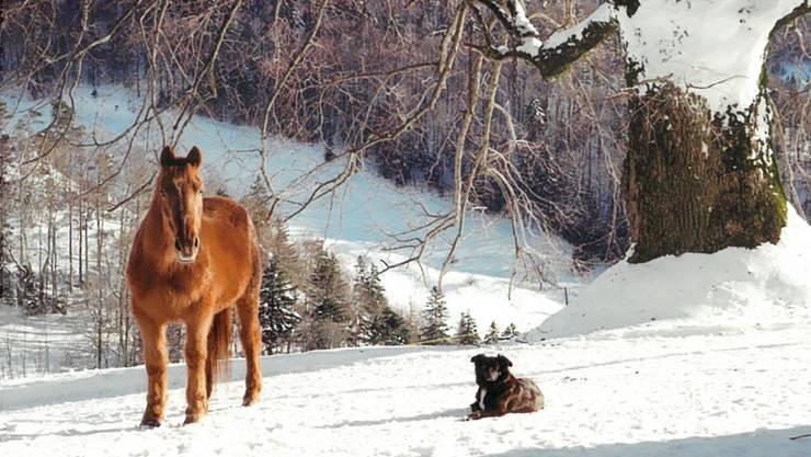 Eines der letzten Fotos von Diana: Die Stute im Winter 2015 mit Hofhund Nanouk auf der oft schneereichen Ulmet.