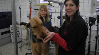 Hier fühlt sich Hündin Jayo wohl: Petra Schneider (vorne) und Ursula Picard kümmern sich im Fricker Hundesalon Vanessa gerne um sie. sbö
