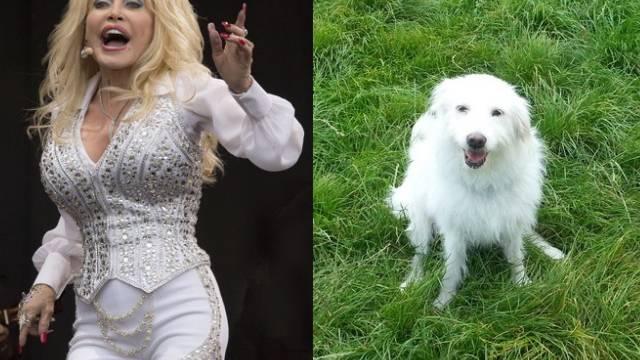 Dolly Parton (l) und Dolly Dog (r)
