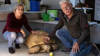 Schildkrötenzucht Niedergösgen