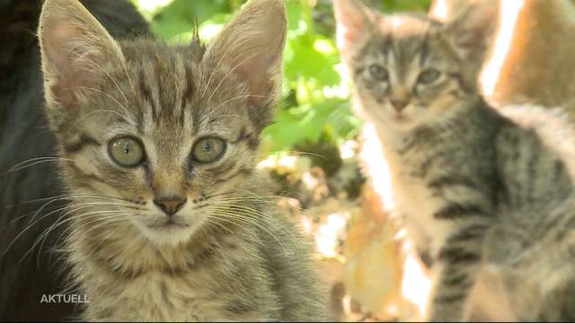 Tierhalteverbot für Katzen-Messie in Rothrist