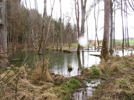 So sah es vor zwei Jahren aus. Der Teich war noch komplett offen.