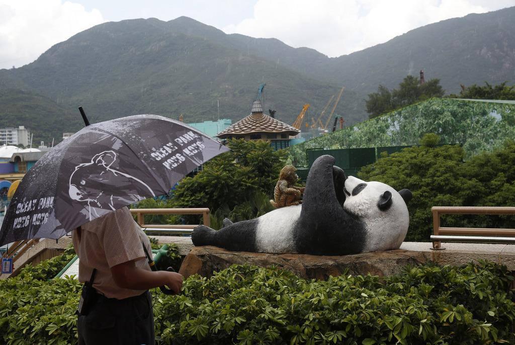 Panda Jia Jia in Bildern (© Keystone)