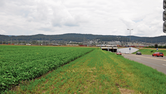 So grün war man sich das Dietiker Gebiet Müsli jahrelang gewohnt. Und so hätten es auch viele bewahren wollen.