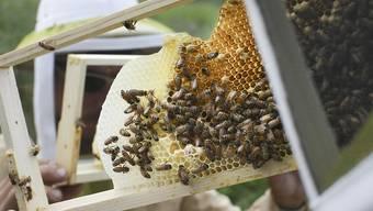 Neonikotinoide halten sich besorgniserregend lange in Honig. Forschende plädieren fürs Vorsorgeprinzip. (Archivbild)