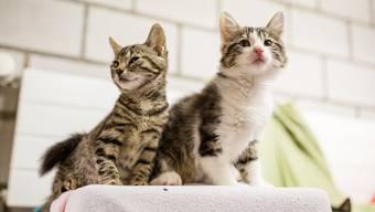 Bereits sind wieder fünf neue Katzen im Tierheim eingetroffen.