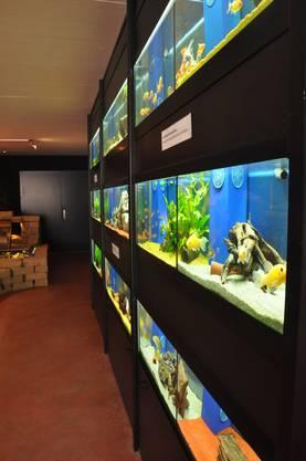 Auch wenn es um Aquarien geht, sind die Mitarbeiter von Koi-Breeder zur Stelle
