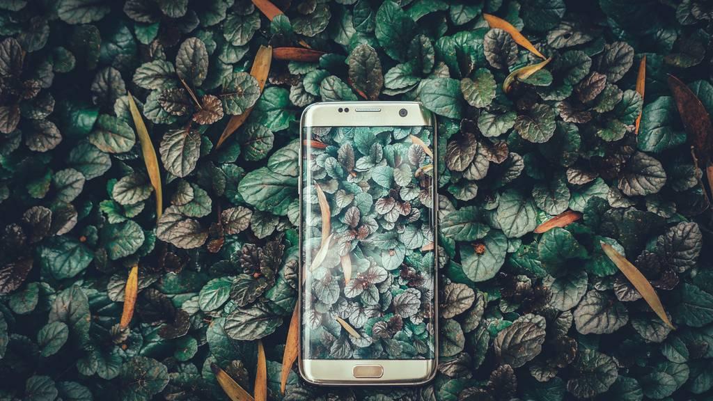 Digital: Plant Snap