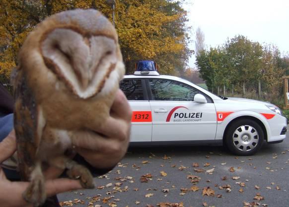 Die Schleiereule hielt die Basler Polizei auf Trab