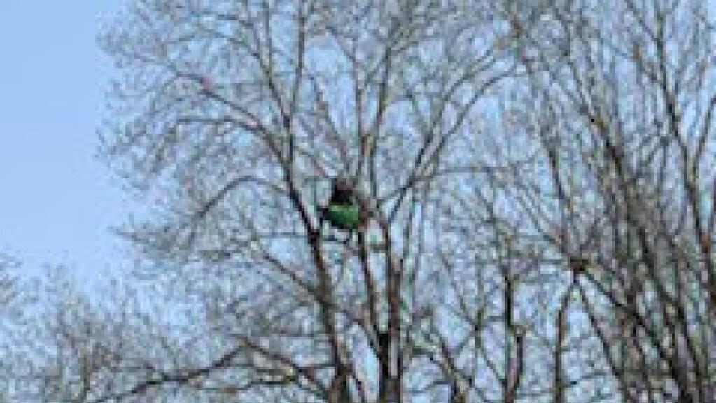 Nach der Räumung des Protest-Camps von Umweltaktivisten bei Eclépens VD harren noch immer zwei Personen auf einem Baum auf dem Gelände aus.