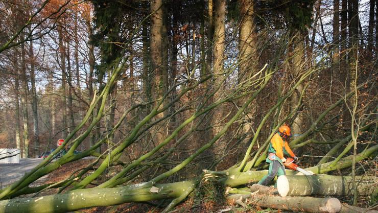 Harte Arbeit, wenig Ertrag: In den Freiämter Wäldern wird krisenbedingt mit einer kleineren Holzernte gerechnet. (Fabian Rottmeier)