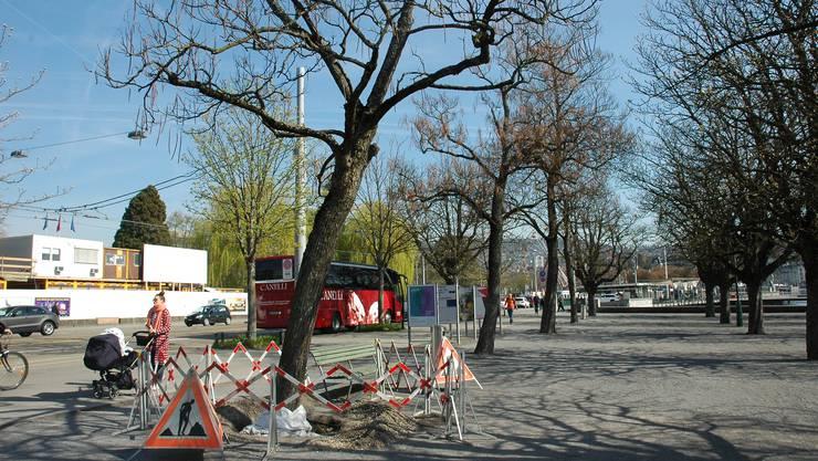 Im März wurden viele Bäume durch Windböen beschädigt. Die Stadt liess sie darauf auf ihre Standfestigkeit überprüfen.
