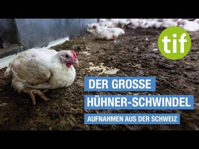 Der grosse Hühner-Schwindel