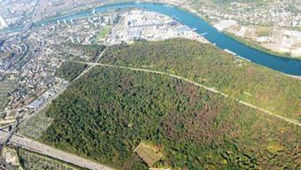 Der Kanton will sich sich für die Folgen der Klimaveränderung - hier der dürre Hardwald.