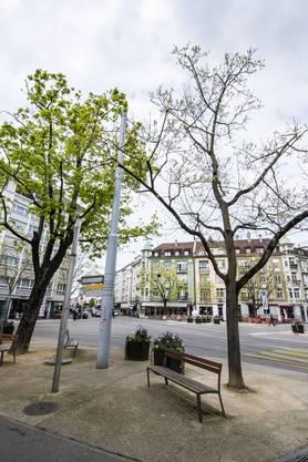 Eine Petition will das Vorhaben stoppen, ein rechtskräftiger Rekurs will fünf der zwölf Bäume schützen.