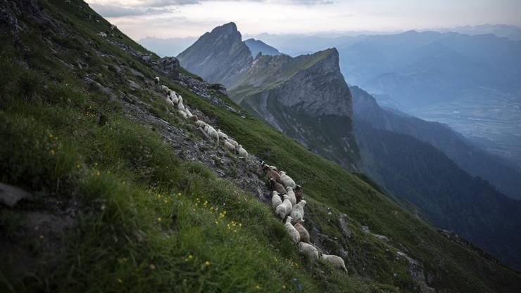 Was auf dem Lande nicht weiter verwundert, ist mitten in der Stadt eher ungewöhnlich: Eine Schafherde.
