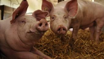 Früher hat man einem forschen Duzer gesag: «Wann haben wir zusammen Schweine gehütet?»