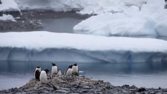 Pinguine nisten in der Antarktis. Dort soll das grösste Meeresschutzgebiet der Erde entstehen. Darauf haben sich 24 Staaten und die EU nach vierjährigen Verhandlungen geeinigt.