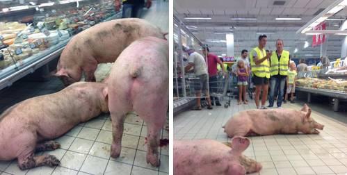 Schweine im Supermarkt