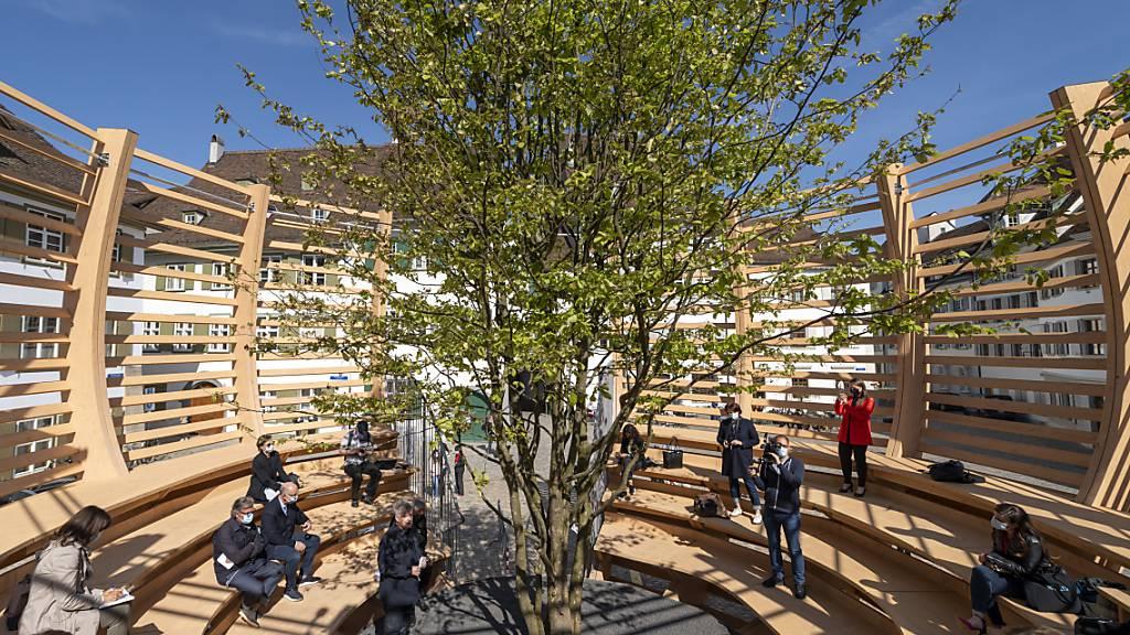 Die Arena erhebt den Baum zum Kunstwerk.